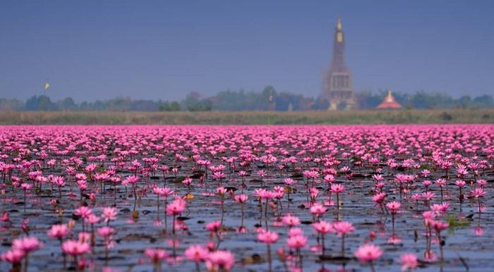Hồ Sen Đỏ Thái Lan tồn tại mênh mang và sâu thẳm